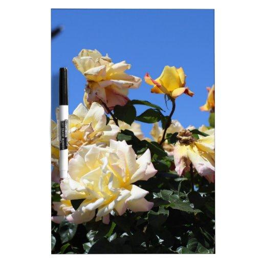 Rosa amarillo pizarras blancas de calidad