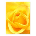 Rosa amarillo postal