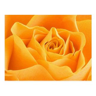 Rosa amarillo postales