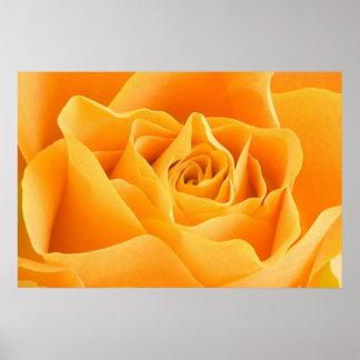 Rosa amarillo póster