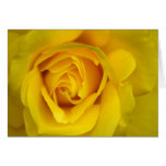 Rosa amarillo tarjeta