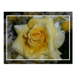 Rosa amarillo tarjeta postal