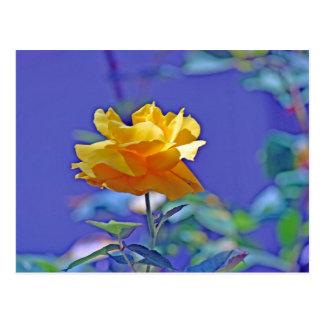 Rosa amarillo tarjetas postales