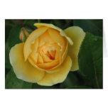 Rosa amarillo tarjetón