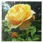 Rosa amarillo y brotes azulejos