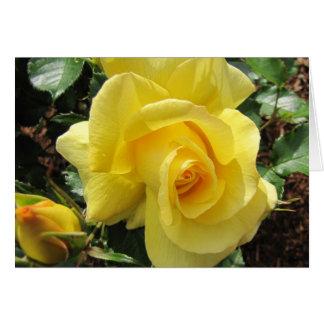 Rosa amarillo y capullo de rosa felicitacion
