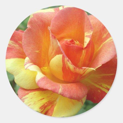 Rosa anaranjado y amarillo 1 etiquetas redondas