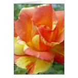 Rosa anaranjado y amarillo 1 tarjetas