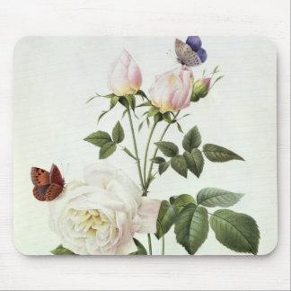 Rosa: Bengale el Hymenes, de los 'rosas de Les Alfombrillas De Ratones