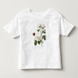 Rosa: Bengale el Hymenes, de los 'rosas de Les Camisas