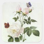 Rosa: Bengale el Hymenes, de los 'rosas de Les Pegatina Cuadrada