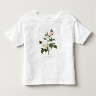Rosa: Bengale el Hymenes, de los 'rosas de Les Playera