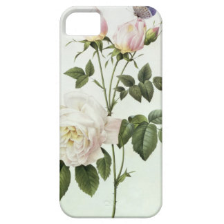 Rosa: Bengale the Hymenes, from 'Les Roses' iPhone SE/5/5s Case