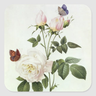 Rosa: Bengale the Hymenes, from 'Les Roses' Square Sticker
