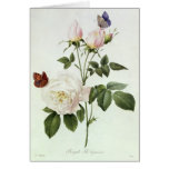 Rosa: Bengale the Hymenes Greeting Card