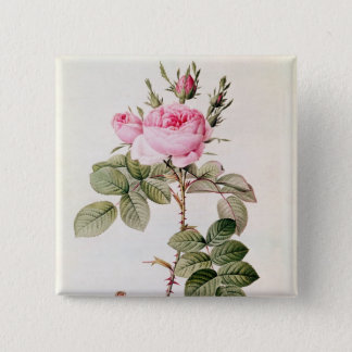 Rosa Bifera Officinalis, from 'Les Roses' Button