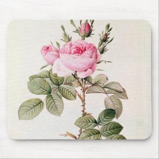 Rosa Bifera Officinalis, from 'Les Roses' Mouse Pad