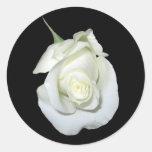 Rosa blanco #1 pegatinas redondas