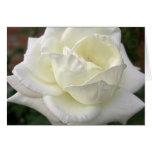 Rosa blanco 3 tarjeta