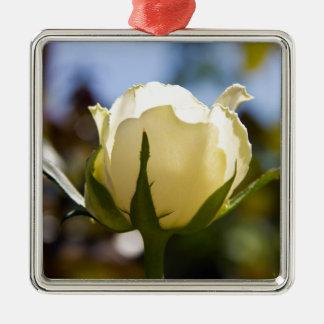 Rosa blanco adorno para reyes