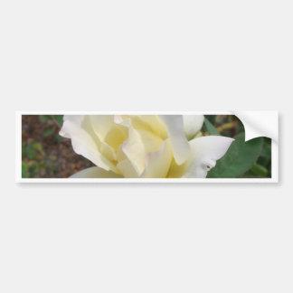 Rosa blanco aerodinámico - productos del arte de C Etiqueta De Parachoque