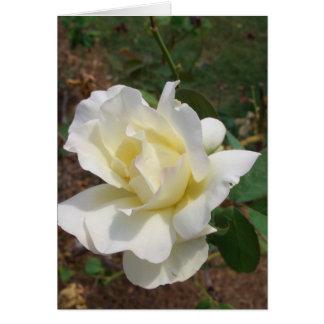 Rosa blanco aerodinámico - productos del arte de felicitacion