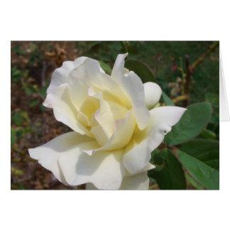 Rosa blanco aerodinámico - productos del arte de tarjeton