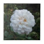 Rosa blanco azulejo cerámica