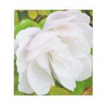 Rosa blanco blocs de notas