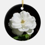 Rosa blanco bonito adorno para reyes