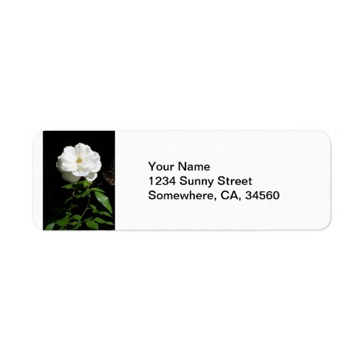 Rosa blanco bonito etiquetas de remite