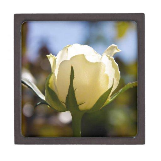 Rosa blanco caja de regalo de calidad