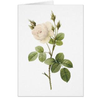rosa blanco (campanulata de Rosa alba) por Redouté Tarjeta De Felicitación