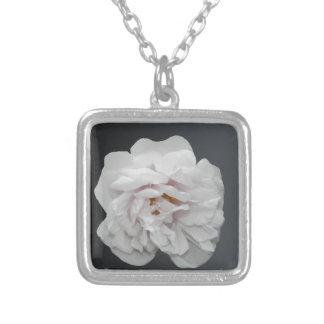 Rosa blanco collar plateado