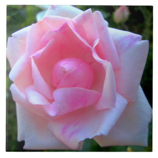 Rosa blanco color de rosa teja