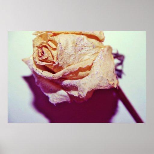 Rosa blanco con las chispas póster