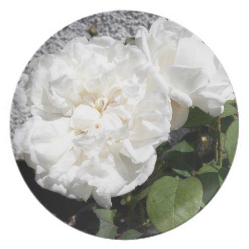 Rosa blanco contra una pared rayada del guijarro plato de cena