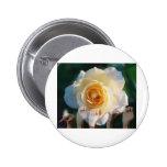 Rosa blanco de la paz - ASL Pins