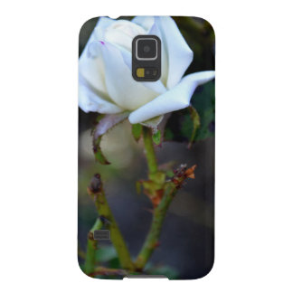 Rosa blanco del amor fundas para galaxy s5