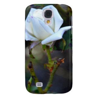 Rosa blanco del amor