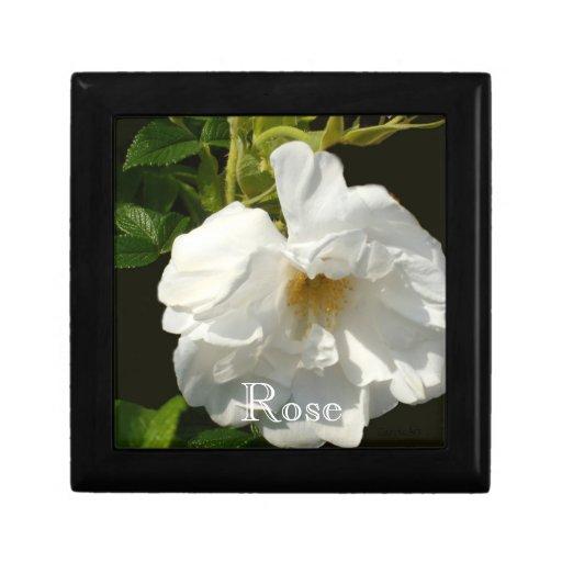 Rosa blanco del ciruelo de playa joyero cuadrado pequeño