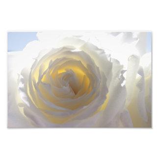 Rosa blanco elegante impresiones fotograficas