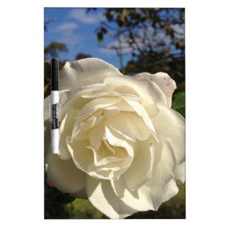 Rosa blanco en la plena floración pizarra blanca