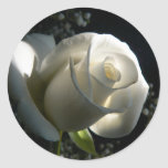 Rosa blanco etiqueta redonda