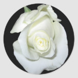 Rosa blanco etiquetas redondas