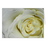 Rosa blanco felicitación