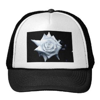 Rosa blanco gorros