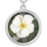 Rosa blanco grimpolas personalizadas
