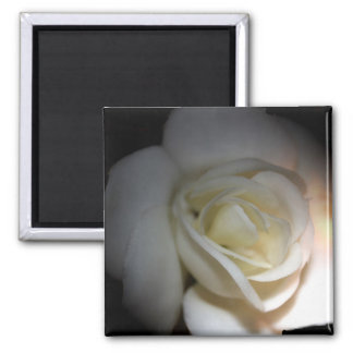 rosa blanco imán cuadrado
