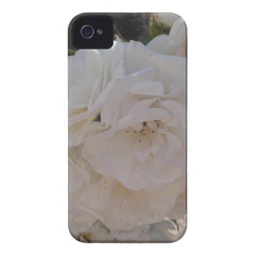 Rosa blanco iPhone 4 coberturas